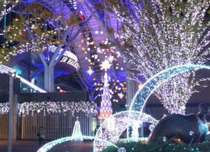 Illuminations (Christmas lights) in Fukuoka 2013