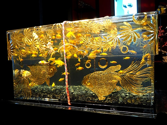 Art Aquarium Exhibition 2018 – Hakata Goldfish Festival & Night Aquarium